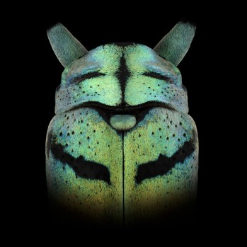 pascal-goet-insect-mask-1
